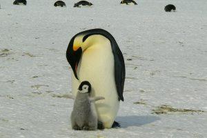 PenguinDad.com Is Born!
